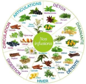 infusions plantes médicinales