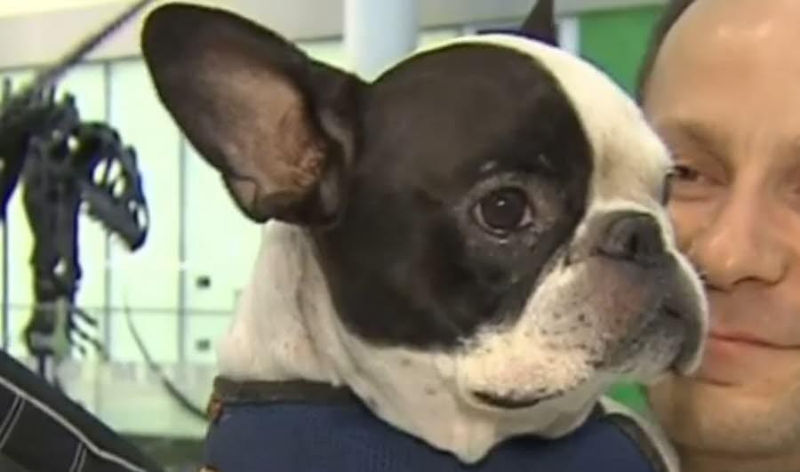 insolite et mignon : Un pilote déroute son avion pour sauver un chien …j'adore