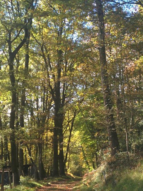 Santé : marcher dans la nature fait fuir les idéesparasites