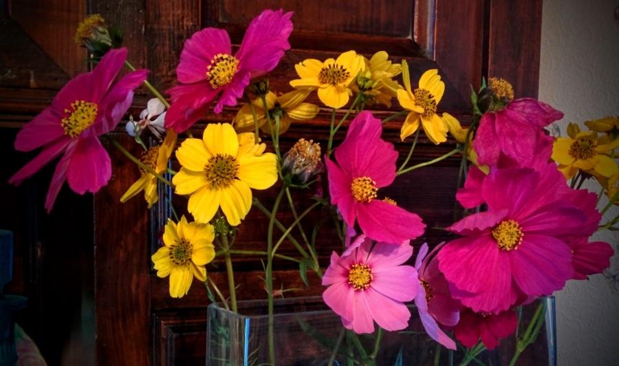 Dernières fleurs dujardin