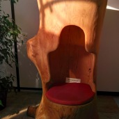 salon fauteuil dans arbre rond