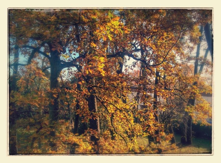 Douceur de find'automne
