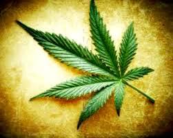 Cannabis le Canada va devenir le premier pays du G7 à lelégaliser