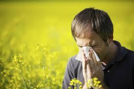 Insolite : Allergies. L'héritage de l'homme deNéandertal