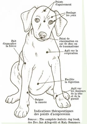 chien acupressure