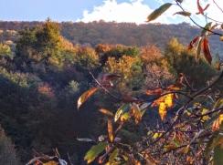 esparros montagne feuilles fauve