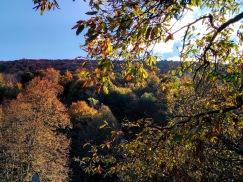 esparros palette d'automne