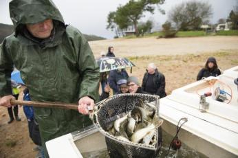 guerledan.les-poissons-de-retour-dans-le-lac-apres-la-vidange_4
