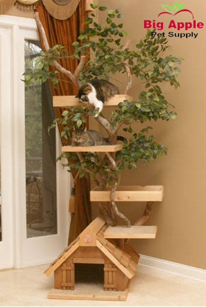 arbre chat.jpg