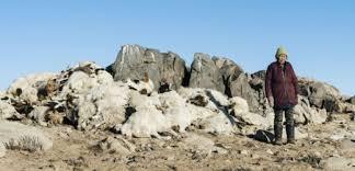 En Mongolie, un hiver extrême décime les cheptels et menace leséleveurs