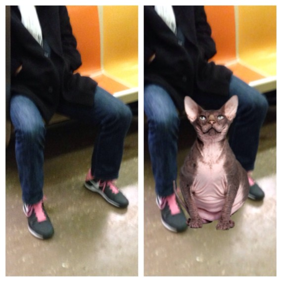 animal entre jambes
