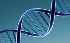 Santé. Des gènes humains transformés par CRISPR pour résister ausida