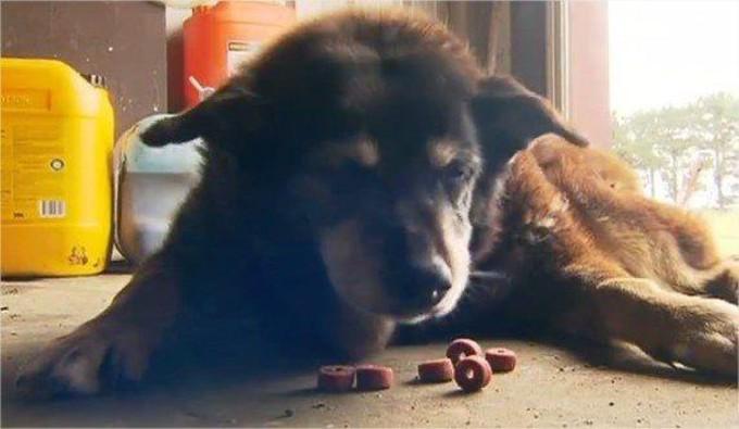 Maggie, le plus vieux chien du monde estmort