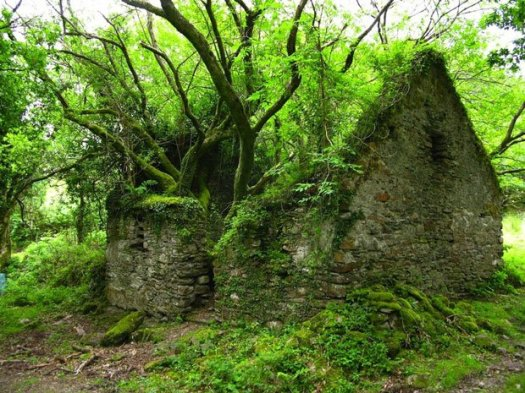 maison arbre.jpg