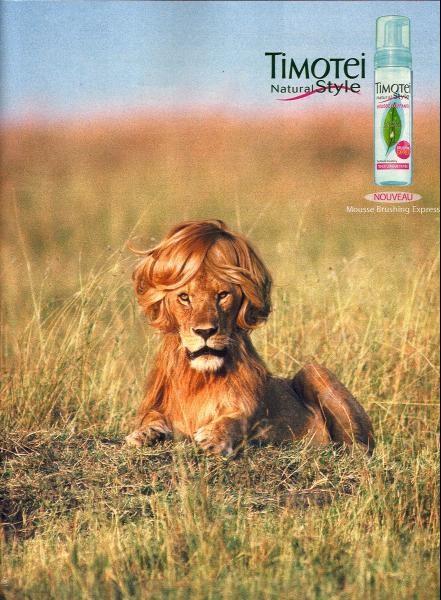 pub lion