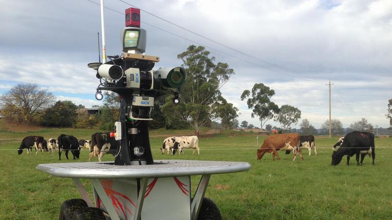 Insolite : En Australie, des troupeaux de vaches seront gardés par desrobots