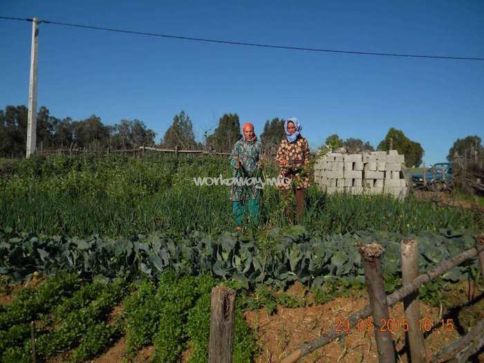 brachoua-permaculture-maroc-developpement-durable-5.jpg