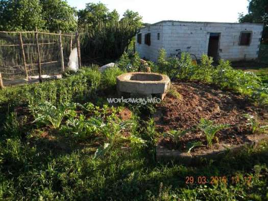 brachoua-permaculture-maroc-developpement-durable-6.jpg
