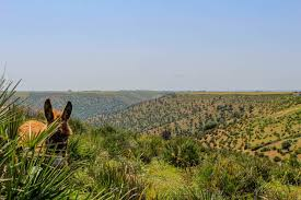 Joli exemple : Brachoua : la permaculture sort un village de lamisère