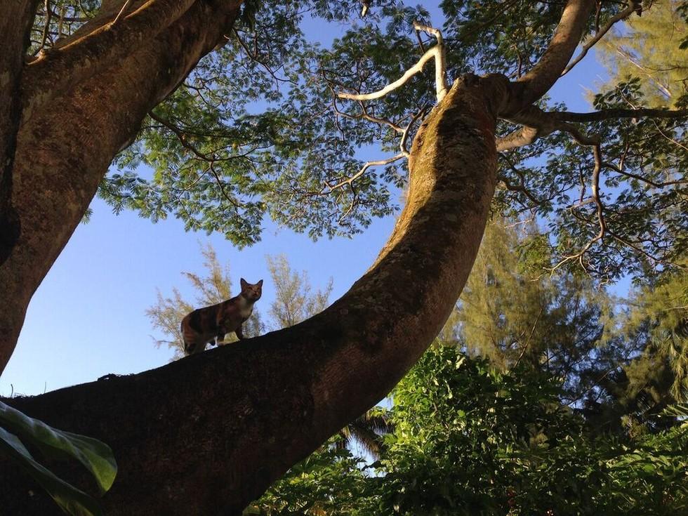 amélia arbre.jpg
