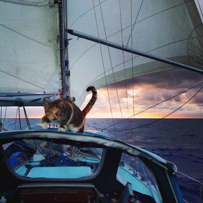 Joli : le chaton abandonné devientnavigateur