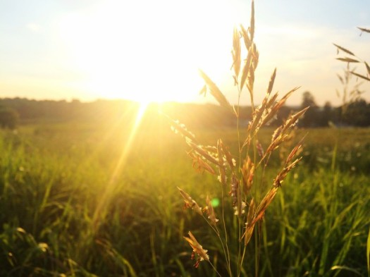 photosynthese-1
