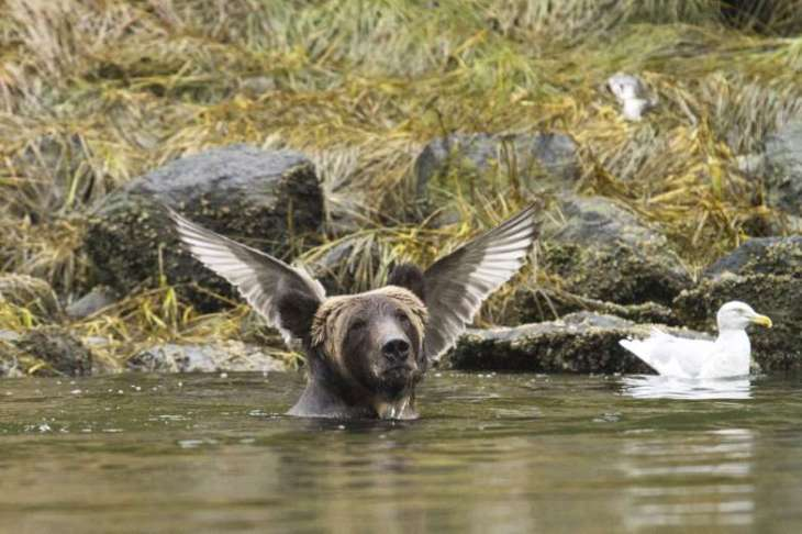 comedy  wildlife 2.jpg