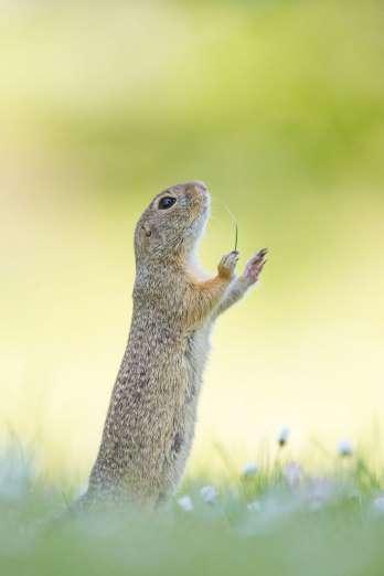 comedy-wildlife-4