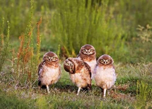comedy-wildlife-7