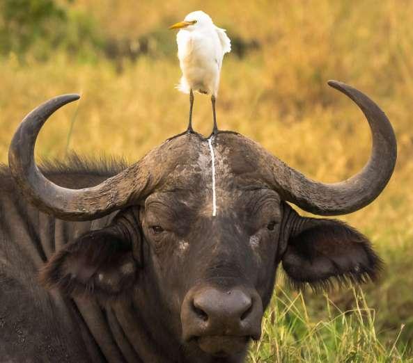Humour : les photos hilarantes d'un concours animaliers -Comedy Wildlife photocontest