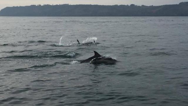 tremblement-de-terre-et-vent-de-panique-chez-les-dauphins
