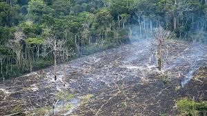 Ecologie : Amazonie,  des indigènes menacés depuis l'élection de Bolsonaro!